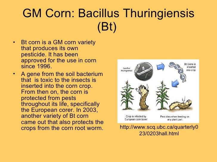 genetic engineering and gm soybean crops Genetic engineering  conferred trait herbicide tolerance example soybean genetic change insect resistance altered fatty acid  on gm crops hope hype n.