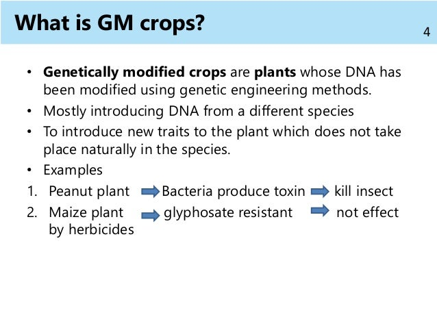 What Is Gm >> Gm Crops