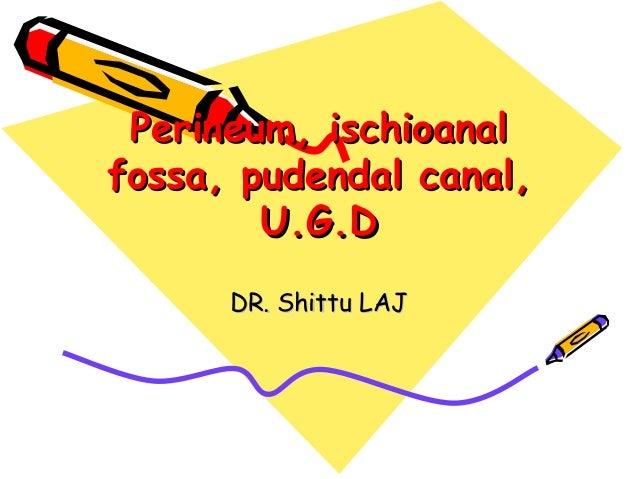 Perineum, ischioanal fossa, pudendal canal, urogenital diaphragm