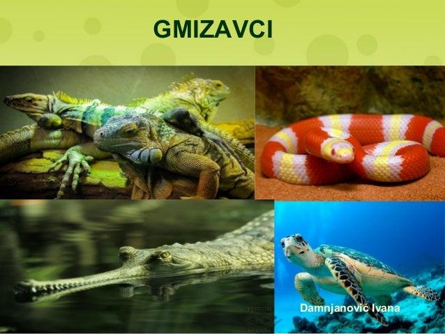 GMIZAVCI Damnjanović Ivana