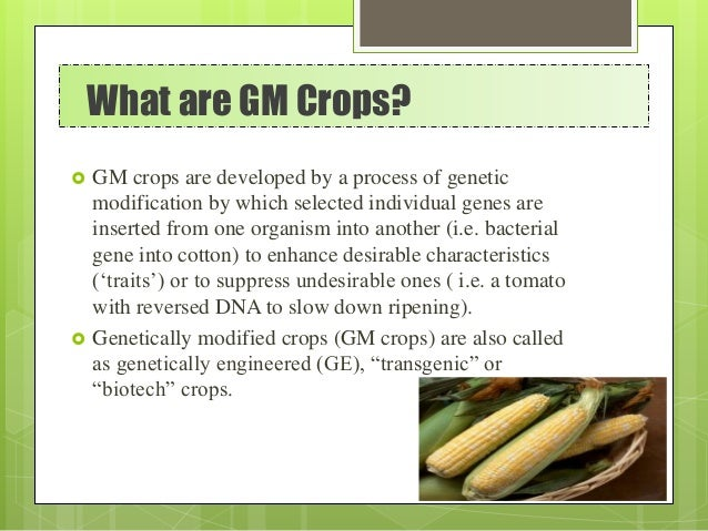 What are GM Crops?  GM crops are developed by a process of genetic modification by which selected individual genes are in...