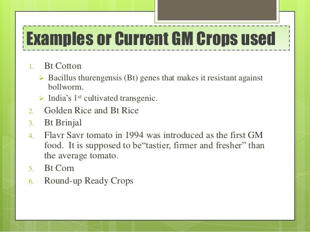 Examples or Current GM Crops used 1. Bt Cotton  Bacillus thurengensis (Bt) genes that makes it resistant against bollworm...