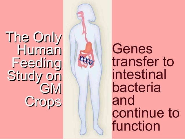 the dangers of genetically modified food to health and environment Gmo food, gmos, environmental impacts, scientific research, health risks there's a fair amount of hype with regard to health risks/dangers as well though genetically modified salmon + dangers of potential escape with regards to wild populations & hybridization.