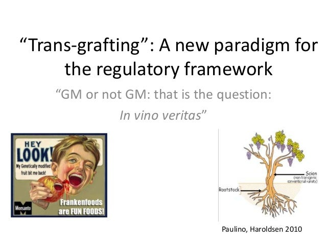 """Trans-grafting"": A new paradigm for the regulatory framework ""GM or not GM: that is the question: In vino veritas"" Paulin..."
