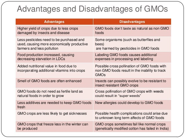 gmo advantages essay