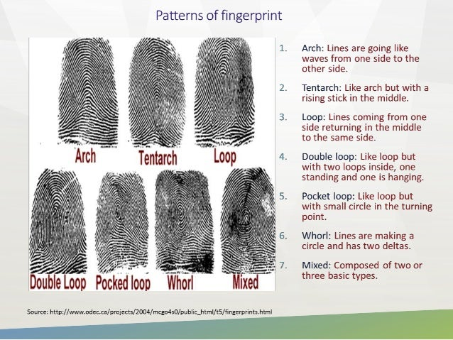 Study On Distribution Of Patterns Of Fingerprint Inspiration Fingerprint Patterns