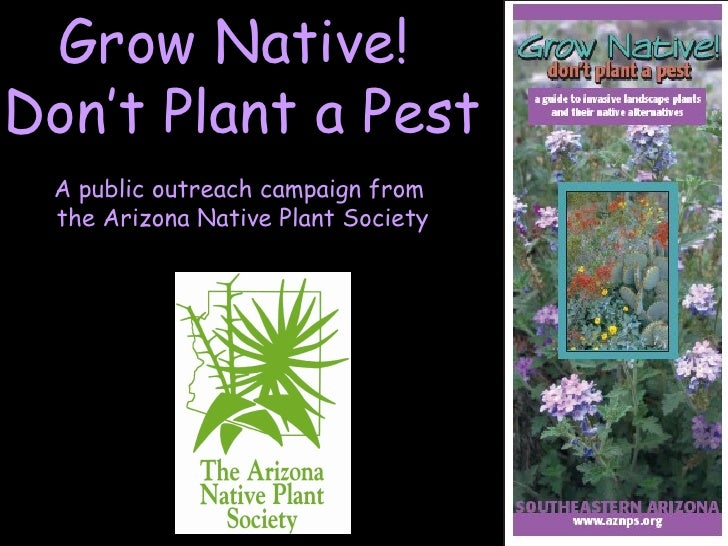 Grow Native!  Don't Plant a Pest A public outreach campaign from  the Arizona Native Plant Society