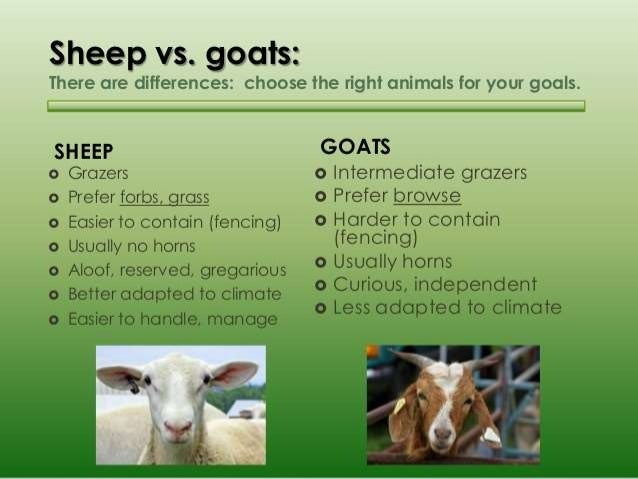 Types Of Sheep Feed