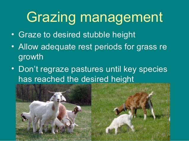 Grazing management • Graze to desired stubble height • Allow adequate rest periods for grass re growth • Don't regraze pas...