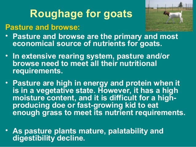 Roughage for goats Pasture and browse: • Pasture and browse are the primary and most economical source of nutrients for go...