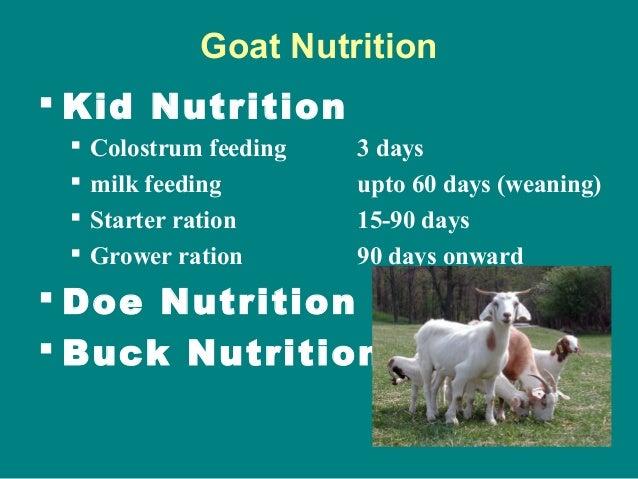 Goat Nutrition  Kid Nutrition  Colostrum feeding 3 days  milk feeding upto 60 days (weaning)  Starter ration 15-90 day...