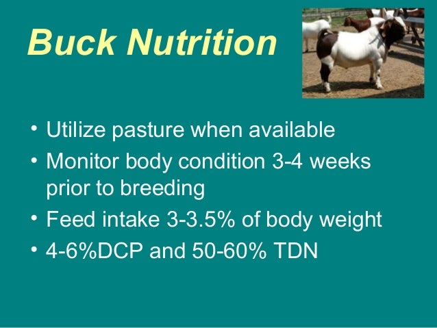 Buck Nutrition • Utilize pasture when available • Monitor body condition 3-4 weeks prior to breeding • Feed intake 3-3.5% ...