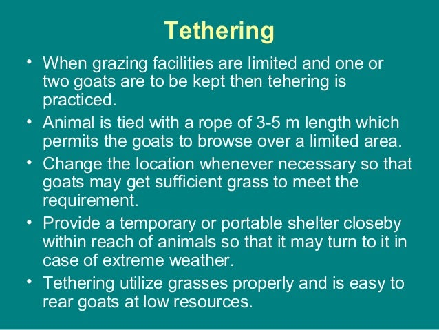Tethering • When grazing facilities are limited and one or two goats are to be kept then tehering is practiced. • Animal i...