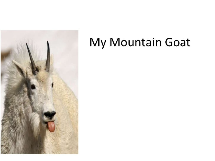 My Mountain Goat<br />