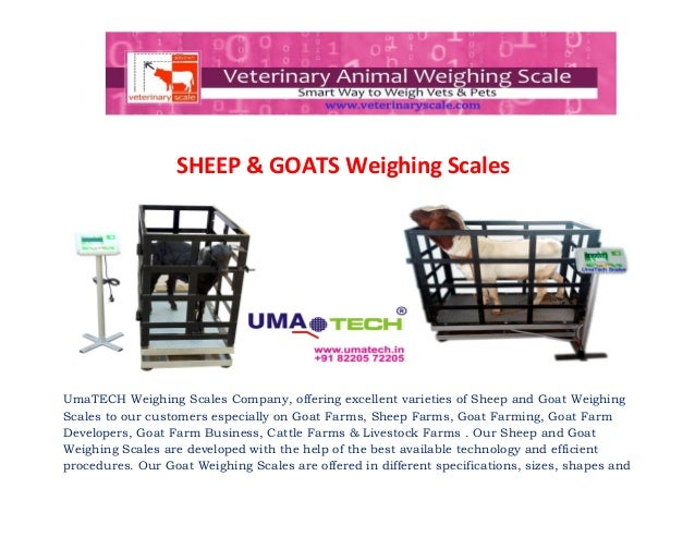 Goat weighing scales for goat farms, goat suppliers