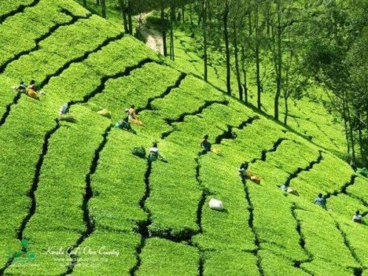 God's own country -kerala Slide 3