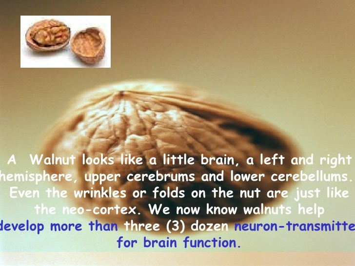 A Walnut looks like a little brain, a left and right  hemisphere, upper cerebrums and lower cerebellums.  Even the wrink...