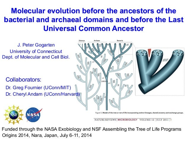 Molecular evolution before the ancestors of the bacterial and archaeal domains and before the Last Universal Common Ancest...