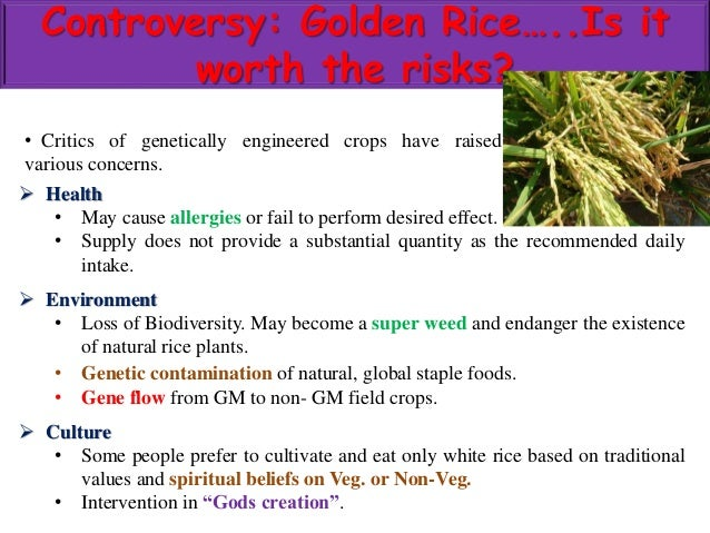 """the ethical controversy in the creation of the golden rice Ethical evaluation of gmo from an islamic perspective  biotechnology such as the creation of new crops  is the case with """"golden rice,"""" a variety."""