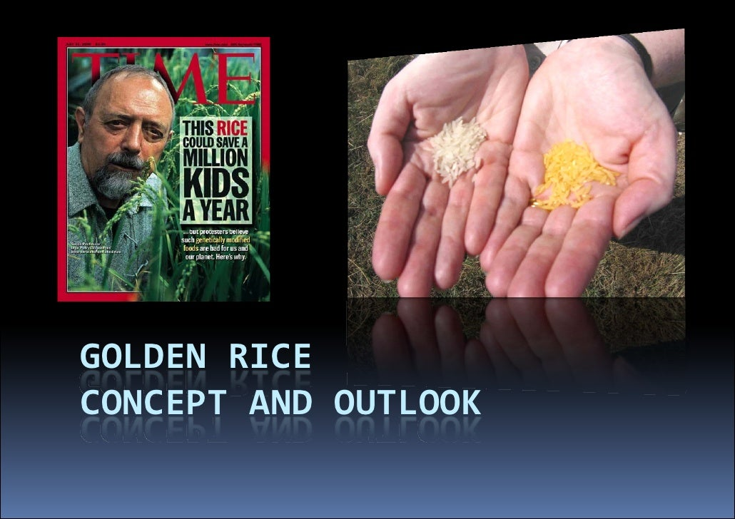 GOLDEN RICE  CONCEPT AND OUTLOOK              U              UTLOOK