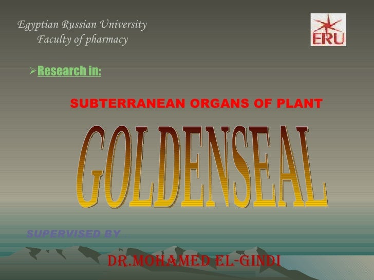 Egyptian Russian University Faculty of pharmacy  <ul><li>Research in: </li></ul>SUBTERRANEAN ORGANS OF PLANT GOLDENSEAL SU...