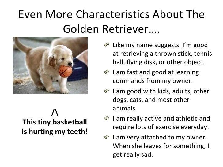 Characteristics Of A Good Guide Dog