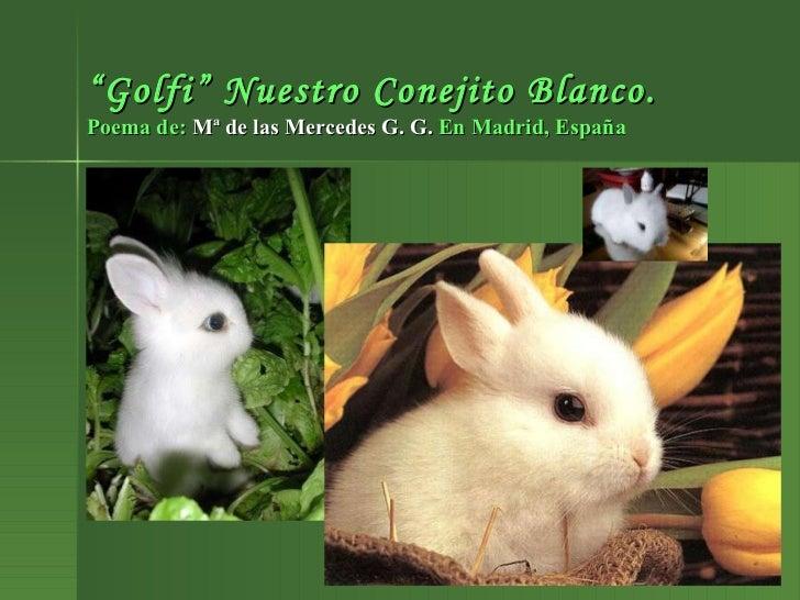 """"""" Golfi"""" Nuestro Conejito Blanco. Poema de:  Mª de las Mercedes G. G.  En Madrid, España"""