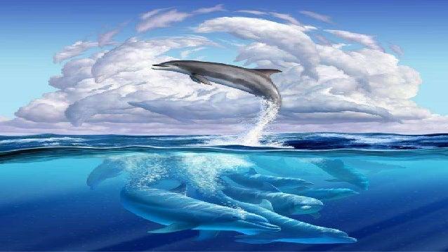 Golfinho divertido, Posso lhe fazer um pedido? Me leva sobre as águas Fazendo vento nos meus ouvidos!