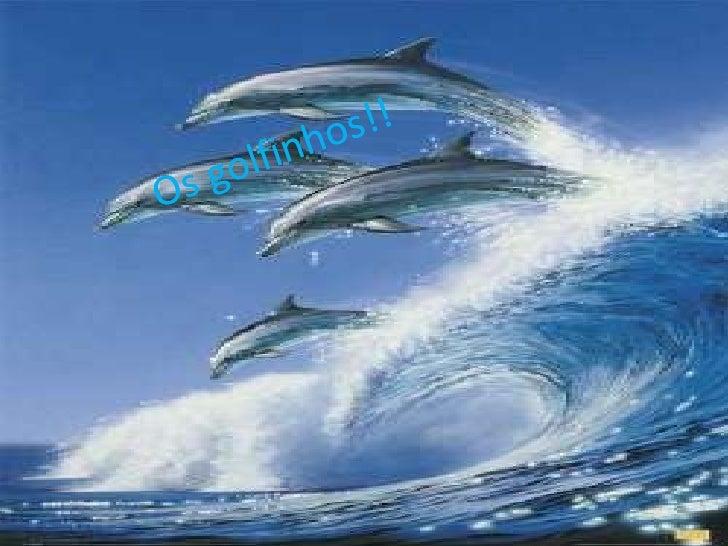 Os golfinhos são conhecidos porfazerem grandes truques.
