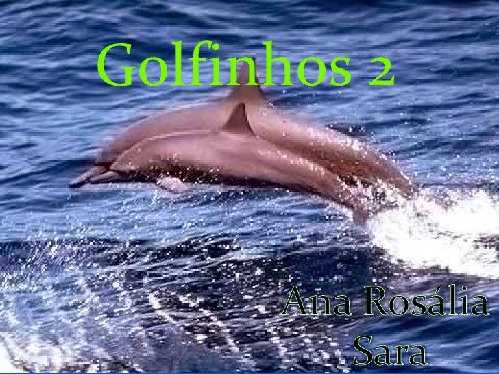 Golfinhos 2<br />Ana Rosália <br />Sara<br />