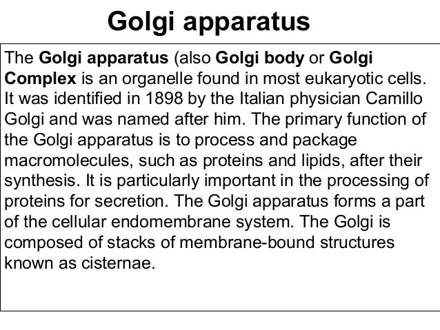 golgi apparatus ppt
