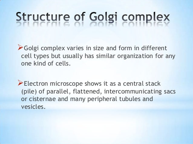 the function of the golgi complex