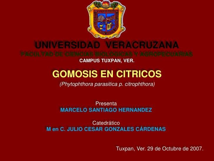 UNIVERSIDAD  VERACRUZANAFACULTAD DE CIENCIAS BIOLÓGICAS Y AGROPECUARIASCAMPUS TUXPAN, VER. GOMOSIS EN CITRICOS (Phytophtho...