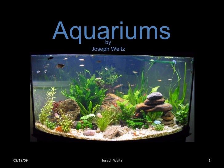Aquariums by Joseph Weitz 06/06/09 Joseph Weitz