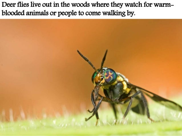 Decorah Envirothon Good Bugs Bad Bugs