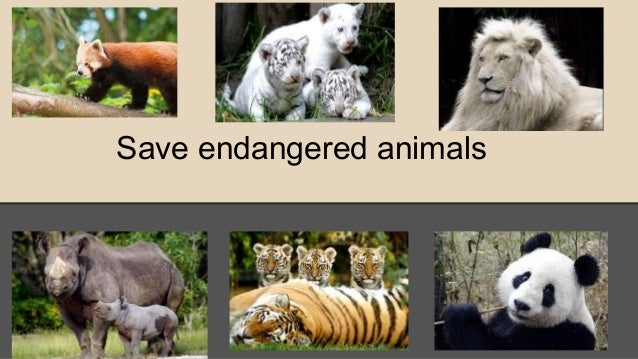 Save endangered animals