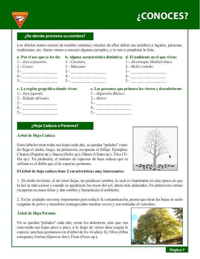 Estudio de la naturaleza for Diferencia entre arboles de hoja caduca y hoja perenne