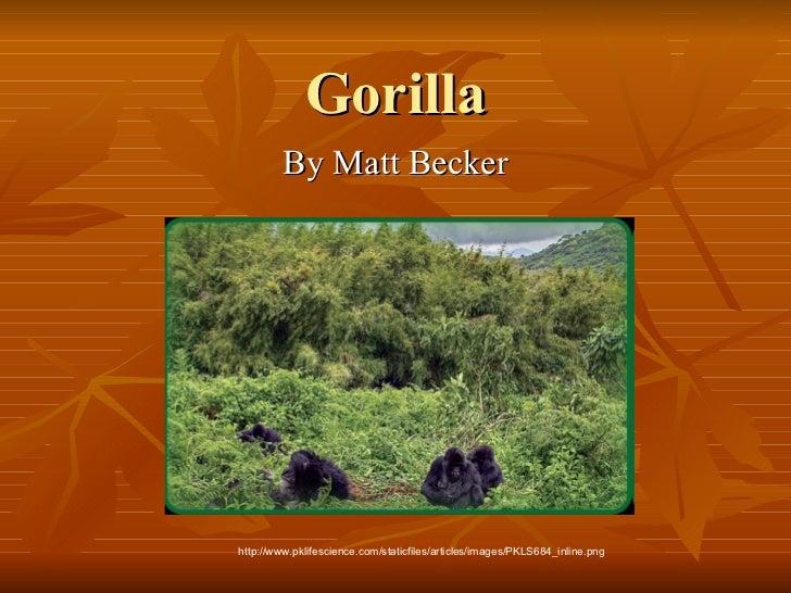 Gorilla By Matt Becker http://www.pklifescience.com/staticfiles/articles/images/PKLS684_inline.png