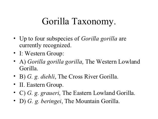Gorillas in our midst.