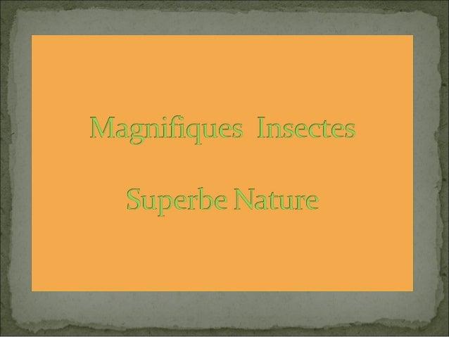 Gros plan incroyable dune tête de fourmi. Les scientifiques estiment à 10 millions de milliards le nombre   de fourmis viv...