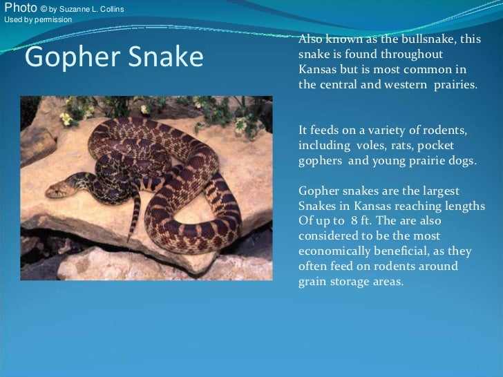 Know Your Kansas Snakes