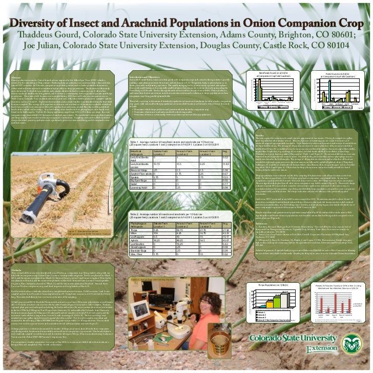 Diversity of Insect and Arachnid Populations in Onion Companion Crop      Thaddeus Gourd, Colorado State University Extens...