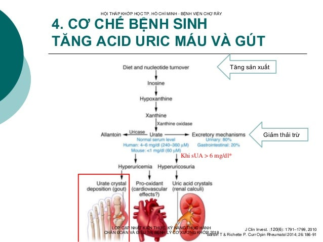 4. CƠ CHẾ BỆNH SINH TĂNG ACID URIC MÁU VÀ GÚT Khi sUA > 6 mg/dl* Tăng sản xuất Giảm thải trừ J Clin Invest. ;120(6): 1791–...