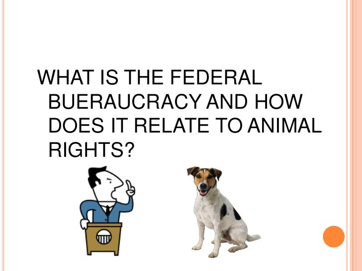 WHAT IS THE FEDERAL BUERAUCRACY AND HOW DOES IT RELATE TO ANIMAL RIGHTS?