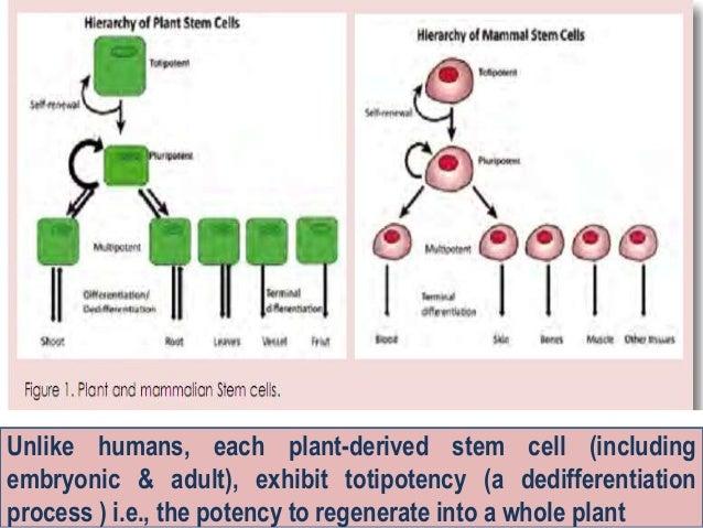 Unique Properties of Stem Cells