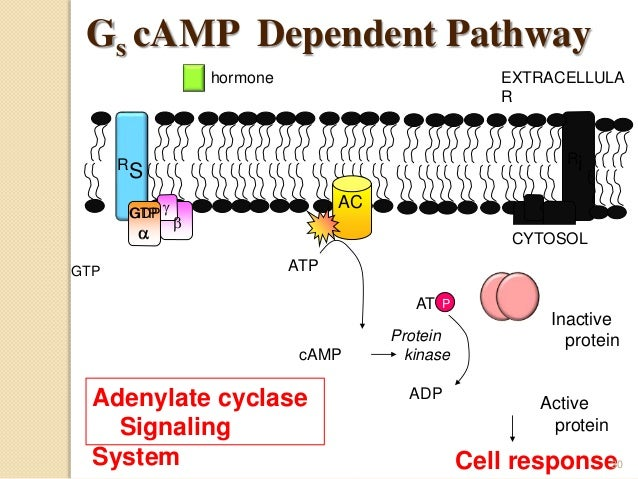 G- Protein Coupled Receptors