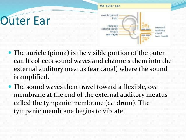 structure of the eye and ear Dynamic balance also helps maintain eye temporal bone and ear canal anomalies are also related to this structure of the ear and are known to be.