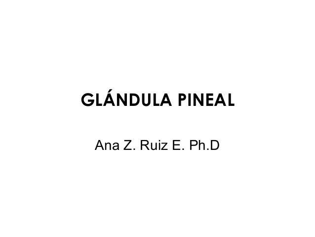 GLÁNDULA PINEAL Ana Z. Ruiz E. Ph.D