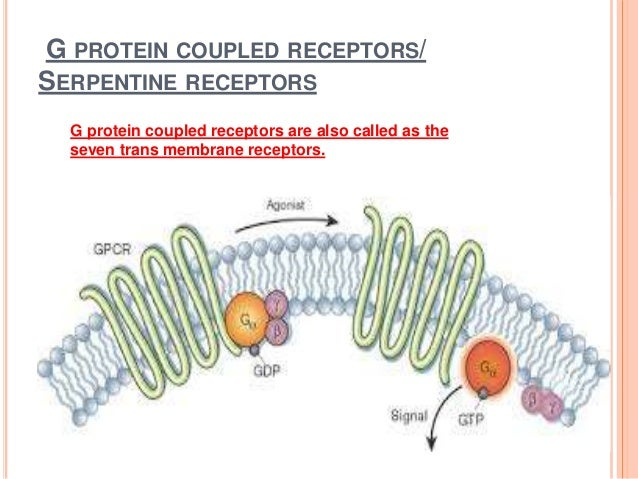 G protein coupled receptors copy