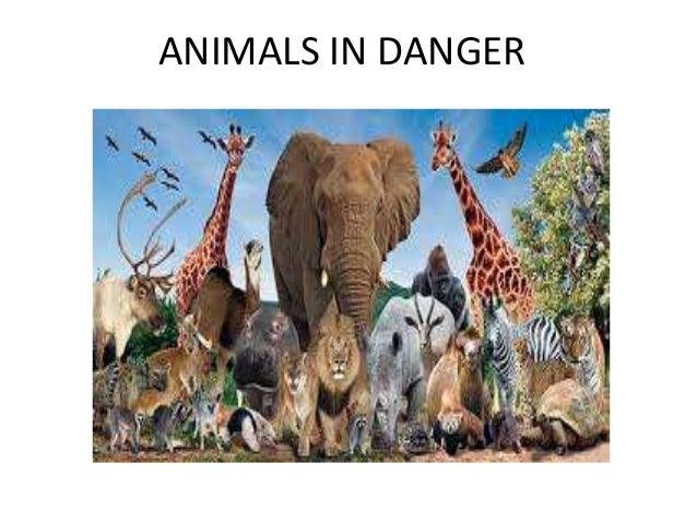 animals in danger of extinction Team: the black panthers valeria rafael fernanda pamela 419.